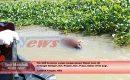 Dua Hari Tenggelam, Mayat Bocah Ditemukan Mengambang