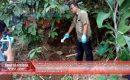Pohon Manggis Berbau Busuk, Setelah Digali  Ternyata Isinya