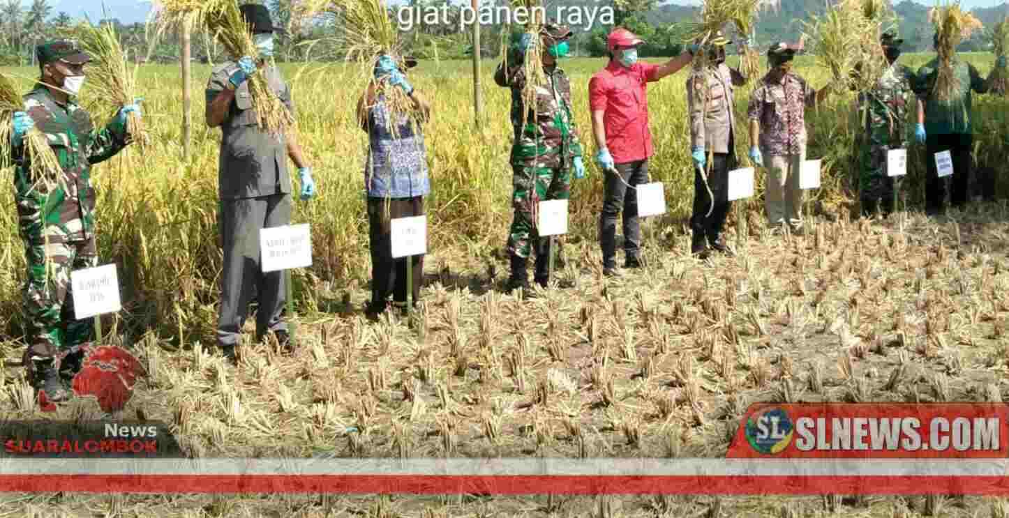 Bersama Petani, TNI di Sumbawa Gelar Panen Raya Ditengah Wabah Covid-19