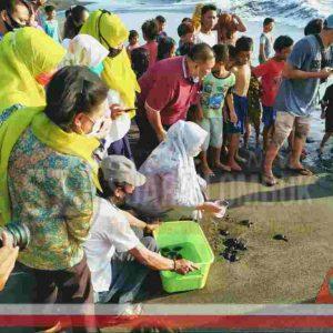 Lepas Puluhan Tukik, SALAM Lauching Pantai Batas Senja Standart Prokes Covid-19