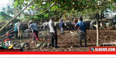 Dinas Pertanian dan Peternakan Lombok Tengah