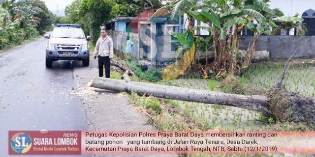Pohon Tumbang di Lombok Tengah Makan Korban