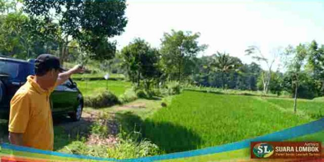 Besok Pagi, Dinas Pertanian Akan Tertibkan Lahan Pertanian Seluas 10 Hektar Aset Pemkab Lombok Tengah di Kecamatan Pringgarata