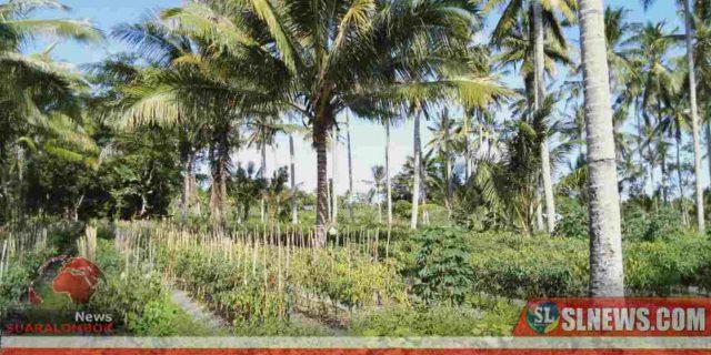 Dinas Pertanian Maksimalkan Pengelolaan Lahan 8 Hektar di Desa Mekar Damai