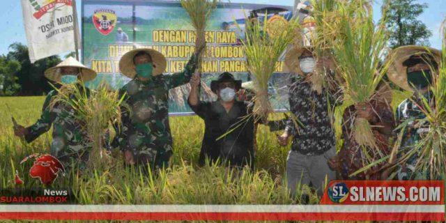 Jaga Cadangan Pangan Ditengah Wabah Covid-19, TNI Bersama Pemkab Lombok Tengah Gelar Panen Raya