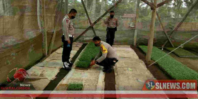 Jaga Ketahanan Pangan Ditengah Wabah Covid-19, Polisi di Lombok Tengah Manfaatkan Lahan Perkarangan