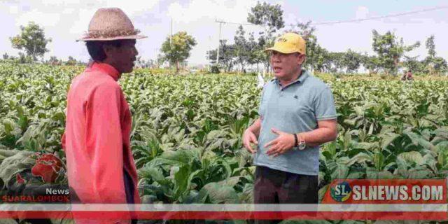 Haji Masrun Janji Perjuangkan Petani Tembakau Lombok Tengah