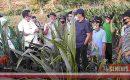 Mentan RI Apresiasi Pertanian Jagung Hibrida Berbasis Korporasi di Lombok Tengah