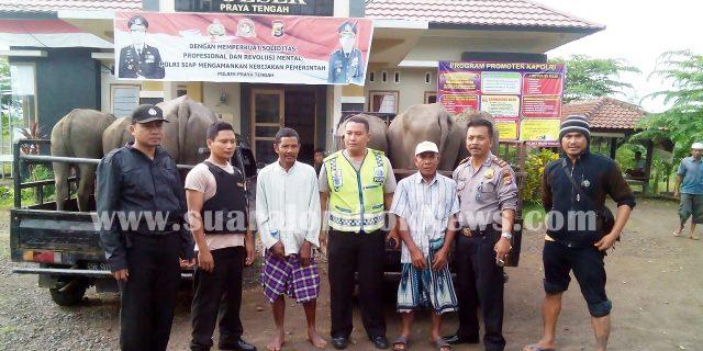 Polisi Gagalkan Pencurian Hewan Ternak
